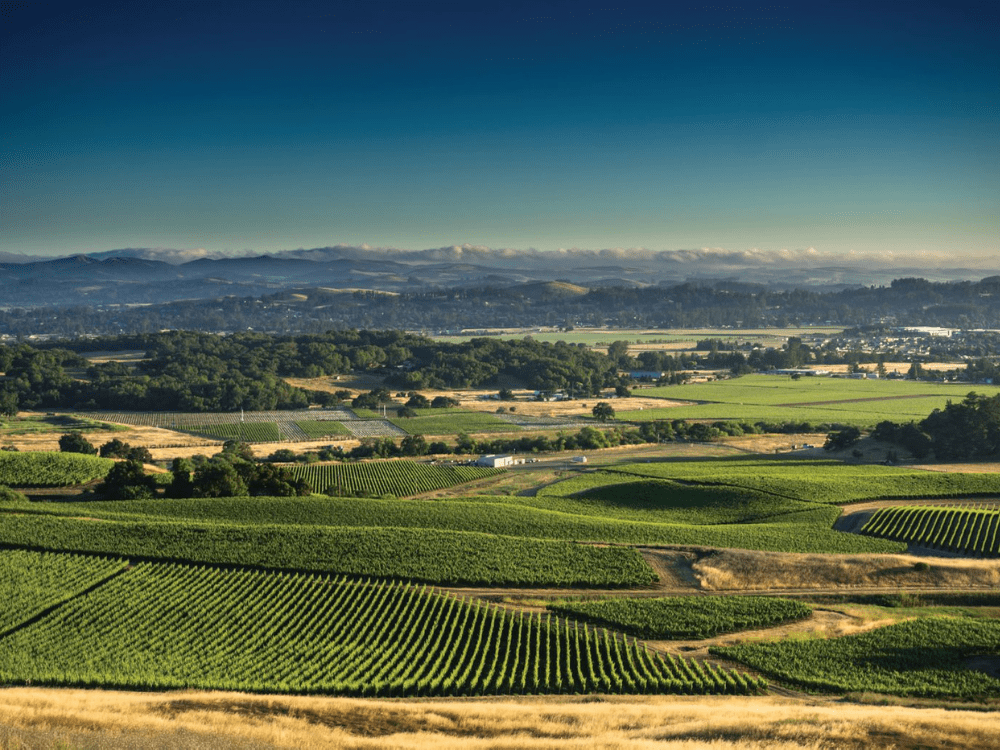 You Need Happy California Wine Right Now